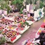 büyüyen pazar çiçekçilik