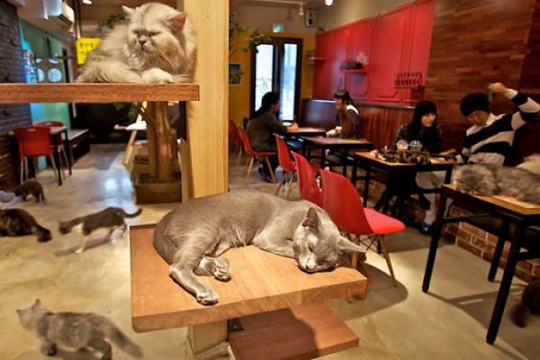 hayvan sever cafe