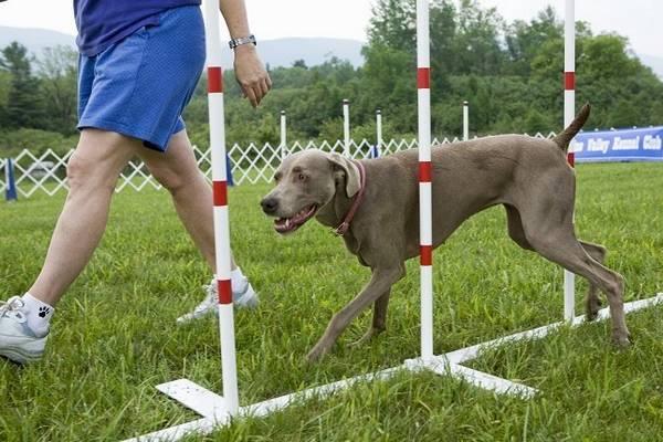 Köpek Eğitim Okulu Açma - İş Fikri
