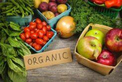 organik gıda sektöründe girişimcilik
