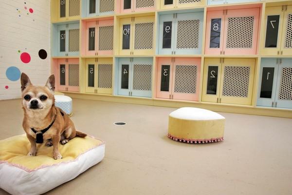 pet hotel hayvan oteli iş fikri