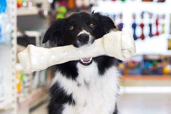 pet shop açmak ister misiniz