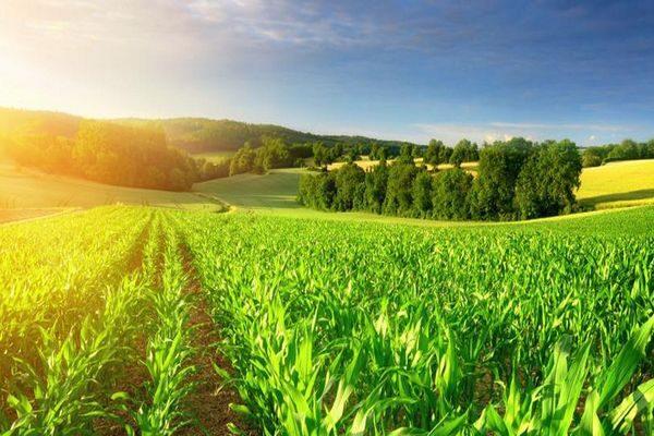 Tarım Alanında En Popüler İş Fikirleri