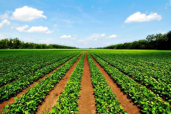 Tarımsal İşletme Açmak - İş Fikri