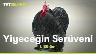 Tavuk Üretim Tesisi